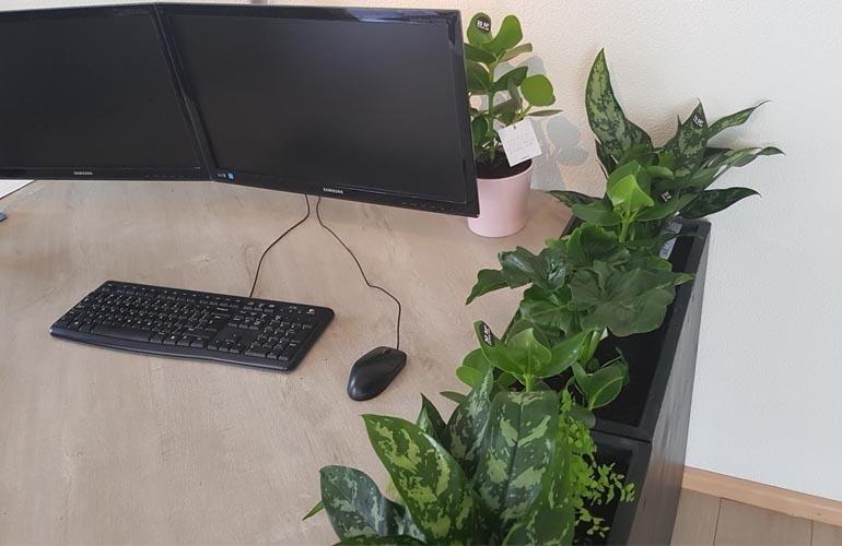 Planten Op Kantoor : Meer motivatie en focus op kantoor investeer in planten